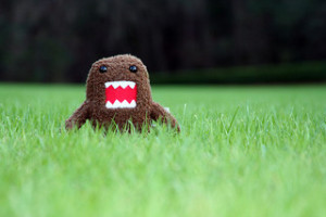 Domo Attacks Florida by Richard Elzey from Flickr (Creative Commons License)