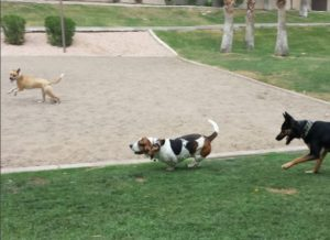 Rosie running with the kids in the neighborhood