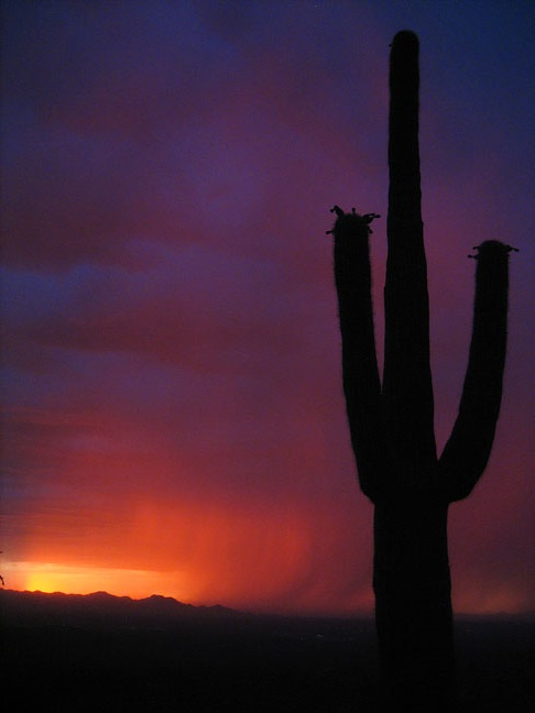 Saguaro Monsoon Sunset by Michael Mifall from Flickr (Creative Commons License)