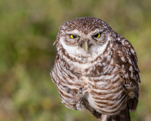 Grumpy! by Andy Morffew from Flickr (Creative Commons License)